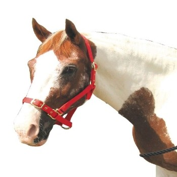 Weatherbeeta Roma Full Red Adjustable Head Collar