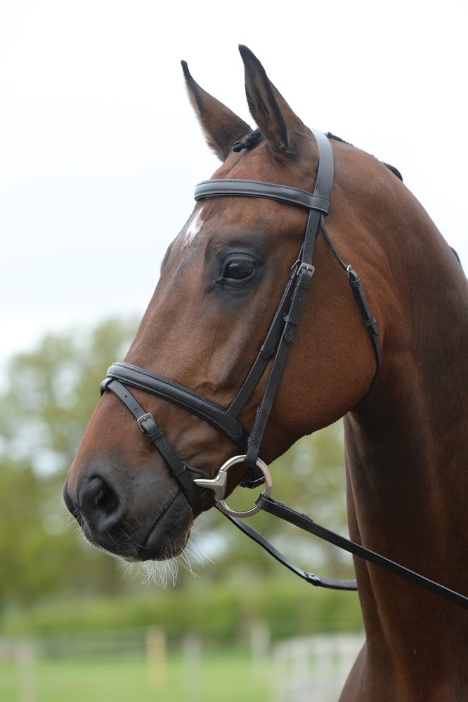 Wbt New Kincade Flash Bridle Brown Cob