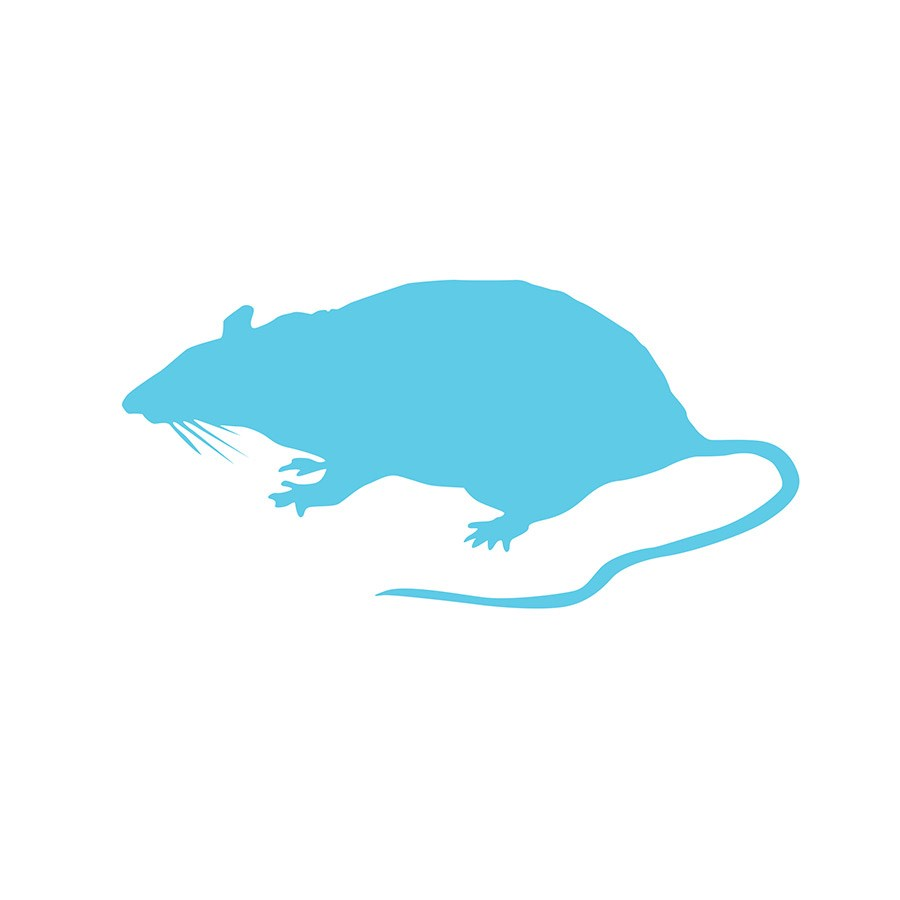 FROZEN RAT SMALL 91G - 150G PACK OF 5