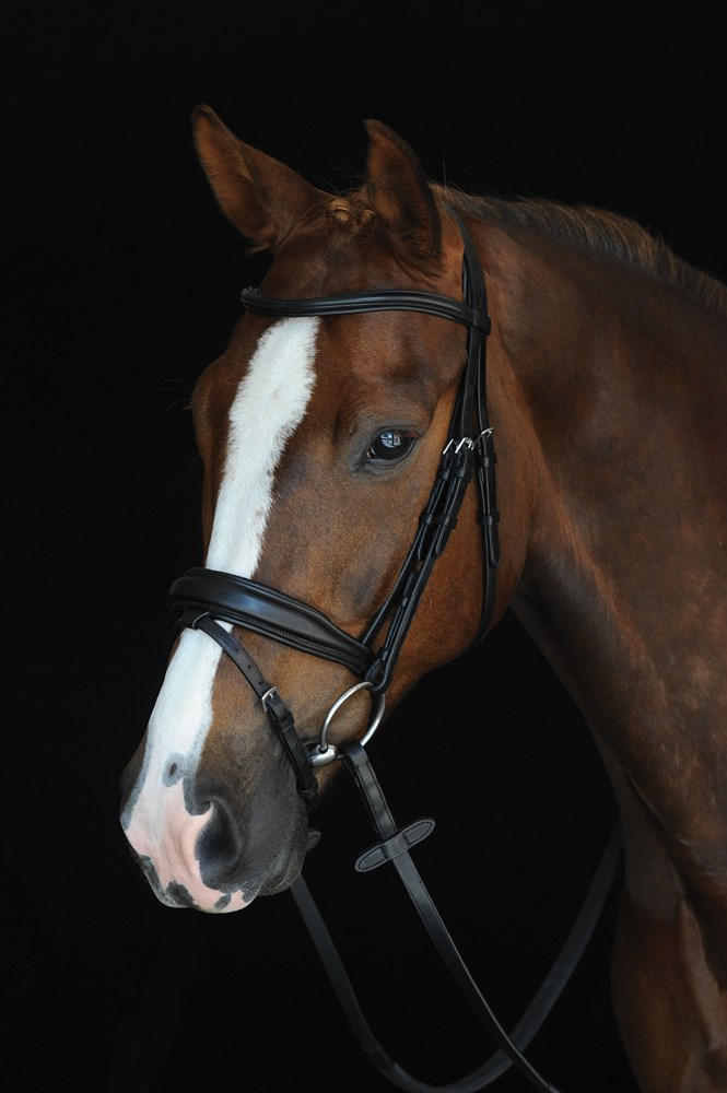 Collegiate Padded Flash Bridle Black Cob