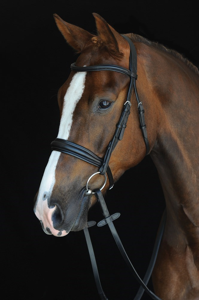 Collegiate Padded Cavesson Bridle Black Cob