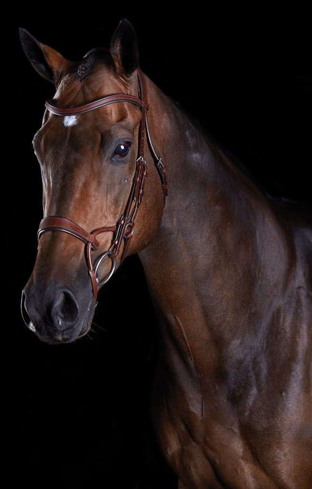 COMFITEC TRAINING BRIDLE BROWN FULL