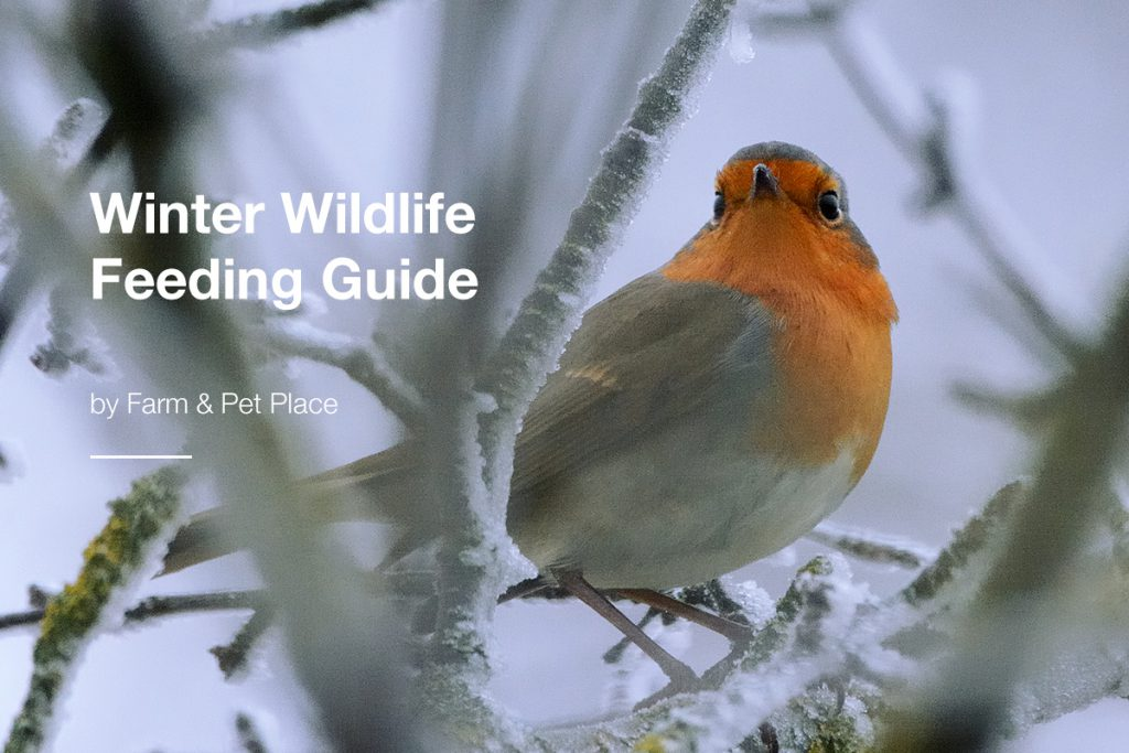 Winter-Wildlife-Feeding