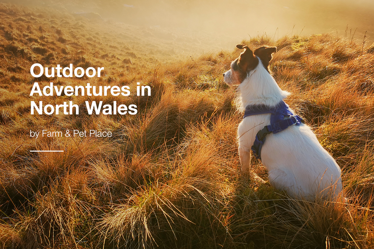 Outdoor Adventures In North Wales