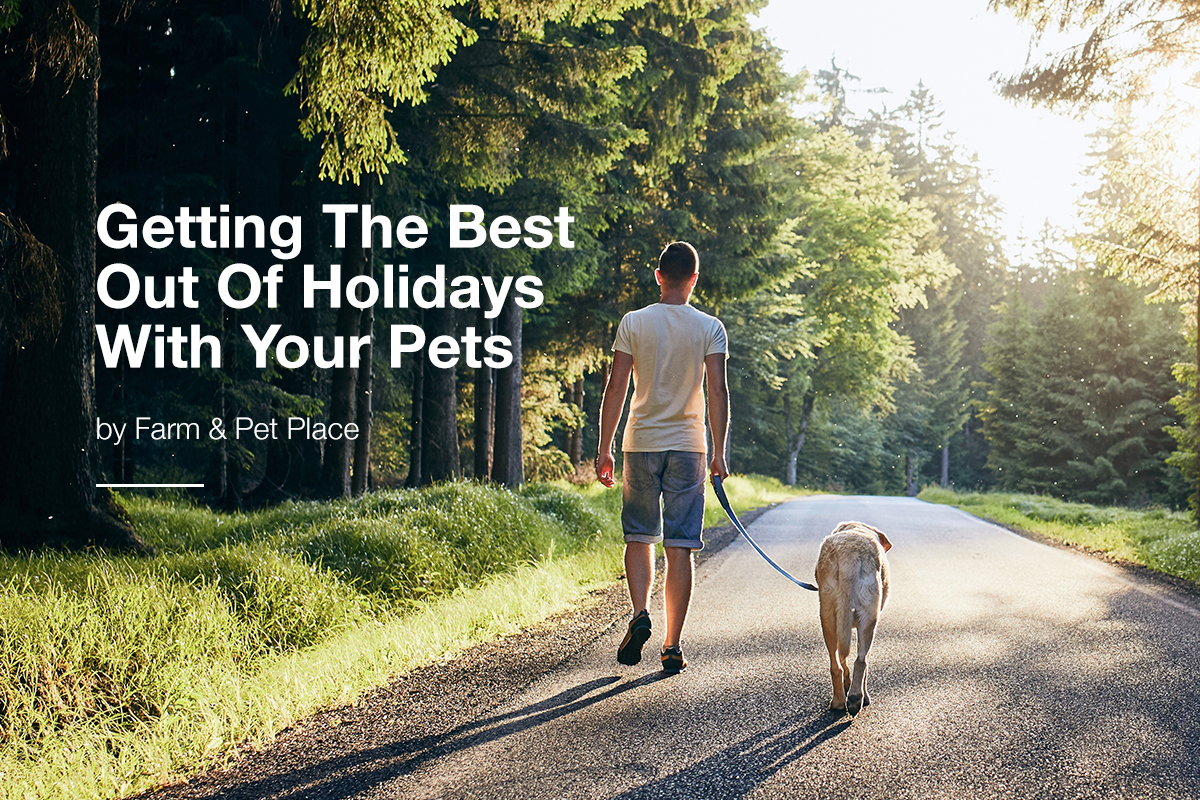 Getting The Best Out Of Holidays With Your Pets